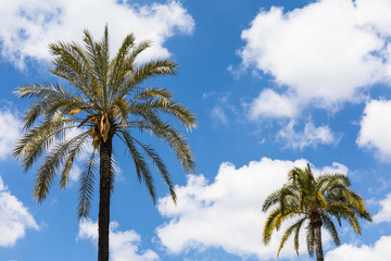 Palm trees over blue and cloudy sky background with free space for text