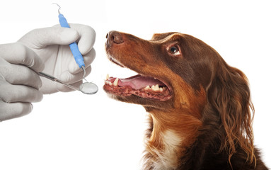 dental hygiene for dogs