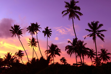 Dusk in the tropics with silhouettes of palm trees against the sky