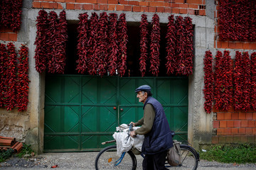 A man pushes a bicycle as bunches of paprika hang on the wall of a house to dry in the village of Donja Lakosnica