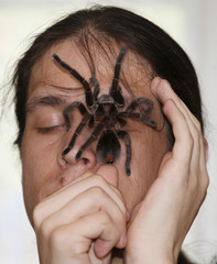 Amateur spider keeper Yegor Konkin displays a venomous Phormictopus antillensis spider on his face at his parents' apartment in the town of Minusinsk, south of Krasnoyarsk