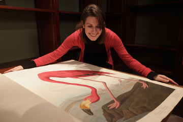 "A Sotheby's employee poses with a page depicting an American Flamingo from John James Audubon's ""Birds of America"", at Sotheby's in London"