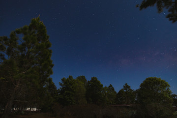 Dark blue sky with many stars over the pine trees in the forest.