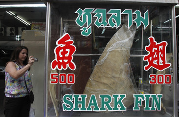 A woman takes a photograph of a dried shark fin on display at a restaurant in Bangkok