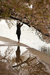 A woman reaches up to the branch of a cherry tree at the Tidal Basin in Washington