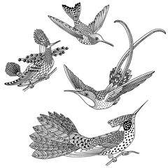 Hand drawn humming birds in black and white