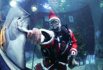A diver dressed as Santa Claus feeds a ray inside a fish tank at the Sea Life aquarium in Berlin