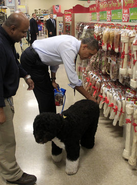 US President Barack Obama selects a bone for his dog Bo at a pet store in Alexandria