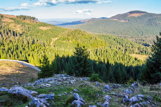 Conifer forest in classic Carpathian mountain valley Landscape