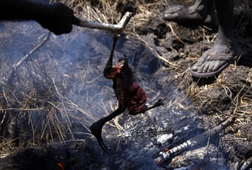Australian Aboriginal hunters Bruce and Robert Gaykamangu of the Yolngu people cook a Magpie Goose they just shot near the 'out station' of Ngangalala, located on the outksirts of the community of Ramingining in East Arnhem Land
