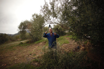 A man cuts an olive branch after the harvesting campaign in his field in the outskirts of Ronda