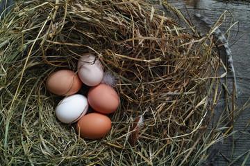 Fresh chicken eggs in a nest in the chicken coop, flat lay.