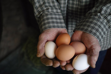 Fresh chicken eggs in the hands of the farmer.