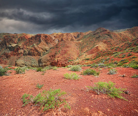 Plants in the red desert