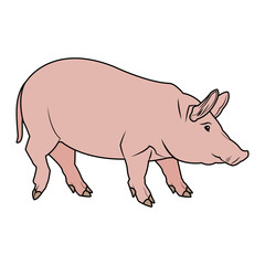cute pig cartoon animal farm image vector illustration
