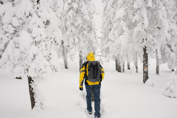 The traveler goes to the snowy forest after a record snowfall in early winter. Monthly rainfall.