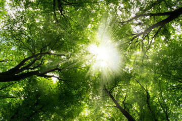 Forest Trees. Nature green wood sunlight Background.