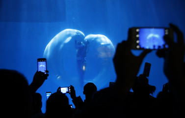 "Visitors take pictures while Beluga whales and their trainers present ""The heart of Ocean"" show at the Harbin Polarland in the northern city of Harbin"