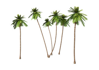 3D Rendering Coconut Palm Trees on White