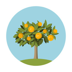 Orange fruit  tree in flat style.Design element for the websites gardening, shops of fruit and for an packing of oranges and juice