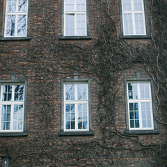 Black and the white image of windows on a wall of an old building
