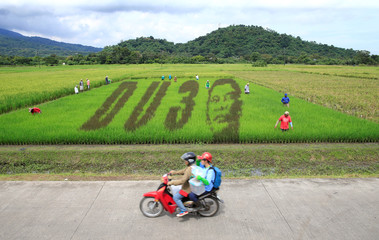 An artwork featuring the image Philippine President Rodrigo Duterte is seen on a rice paddy in Los Banos city, Laguna province, south of Manila
