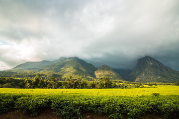 Mulanje Mountain with tea plantation and cloudy sky