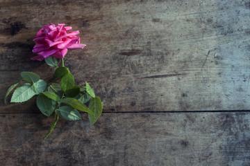 Fresh bright rose on dark rough wood desk. Nature background