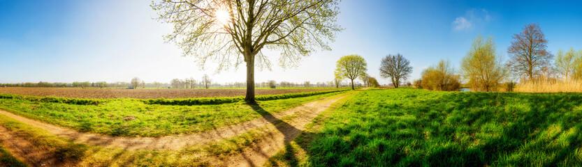 Landschaft im Frühling mit Feldweg und Baum bei Sonnenschein