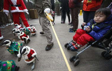 A boy on a stroller looks at penguins wearing Santa Claus and Christmas tree costumes during a promotional event in Yongin