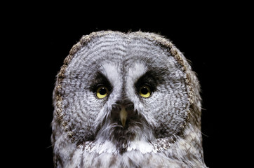 A great grey owl is seen inside its cage, as illumination is lit on for late visitor to observe animals at night environment, at the Royev Ruchey zoo in a suburb of the Siberian city of Krasnoyarsk, Russia