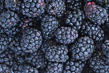 Full frame background of juicy raw blackberry fruit.
