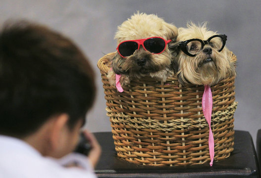 A photographer takes pictures of Lhasa Apso dogs in a basket, during a Dog and Cat Expo in Manila