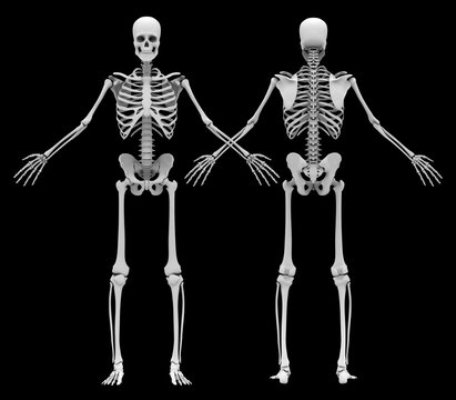 Human's (male) skeleton. Front and back view. Image isolated on a black background. 3D illustration