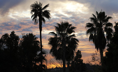 Palm trees are silhouetted at sunset in Pasadena
