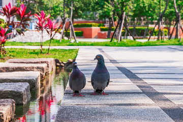 Two pigeons sitting togeather