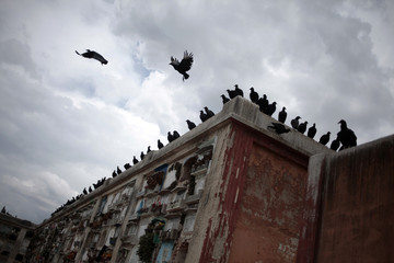 Vultures are perched on top of graves at the Municipal Cemetery in Guatemala City