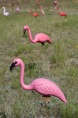 Field of Pink Flamingos