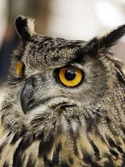 Owl on display