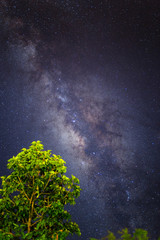 High contrast vertical milky way foreground with bluring green tree