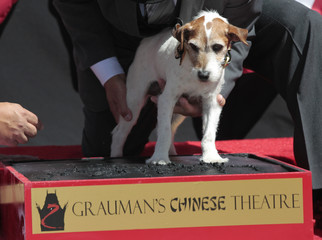 "The dog Uggie, featured in the film ""The Artist"", leaves his paw prints in cement in the forecourt of the Grauman's Chinese theatre in Hollywood"