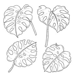 Vector monochrome set of monstera leaves isolated on white. Natural, floral, tropical and wetland themes, decoration for different purposes, printed goods, textile. Coloring book image.