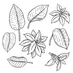 Vector monochrome set of tropical leaves isolated on white. Natural, floral, tropical and wetland themes, decoration for different purposes, printed goods, textile. Coloring book image.