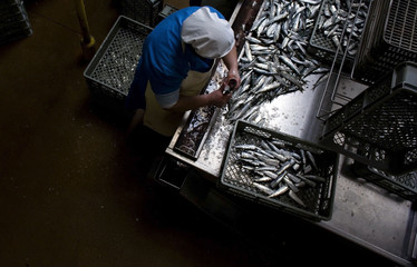 A worker cuts off the head of a sardine after it arrived from the fishing boats at the Poveira canning factory in Povoa de Varzim
