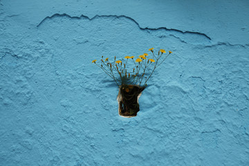 Daisies are seen growing in a drain of the facade of a house in Juzcar