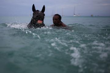 A handler swims with a horse from the Garrison Savannah in the Caribbean Sea near Bridgetown