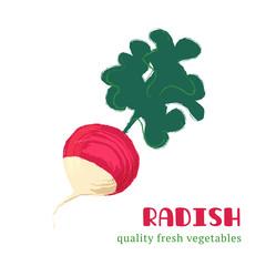 Fresh radish isolated on white background.