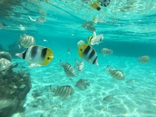 Snorkling at Huahine, Tahiti, French Polynesia