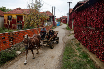 People ride a carriage pulled by a horse as bunches of paprika hang on the walls of houses to dry in the village of Donja Lakosnica