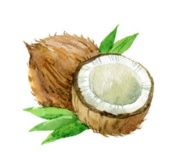 Coconut with leaves, isolated on white background, watercolor illustration